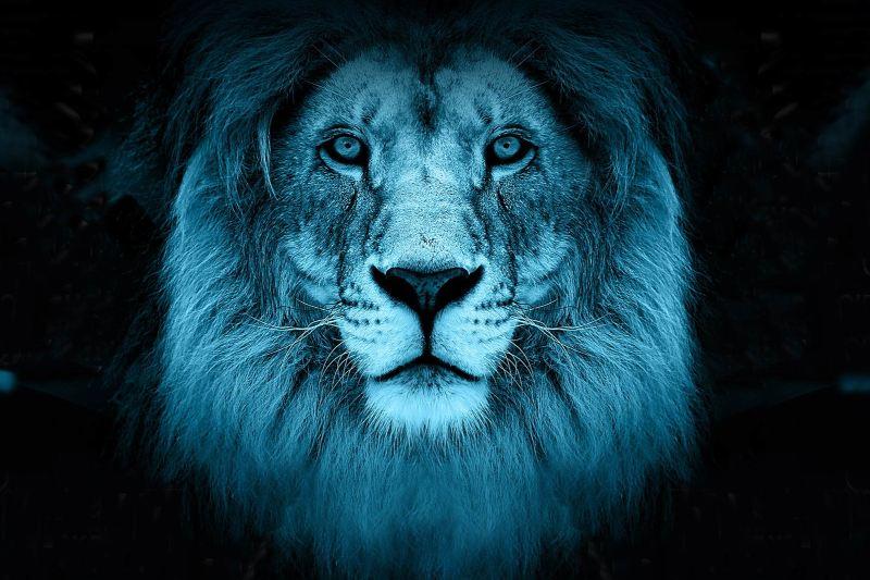 Каннские львы