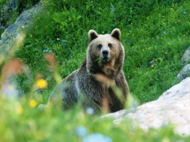 Лиходедова_День медведя 1