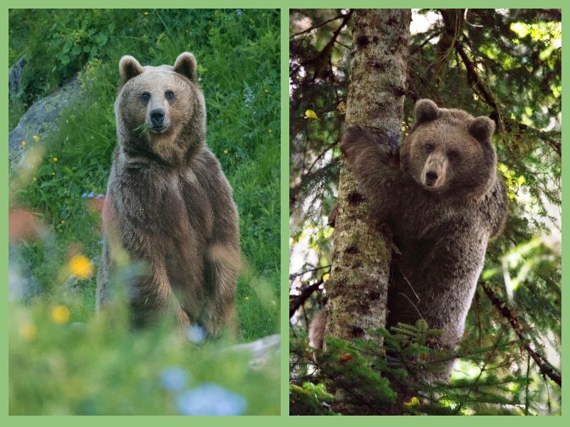 Лиходедова_День медведя 2