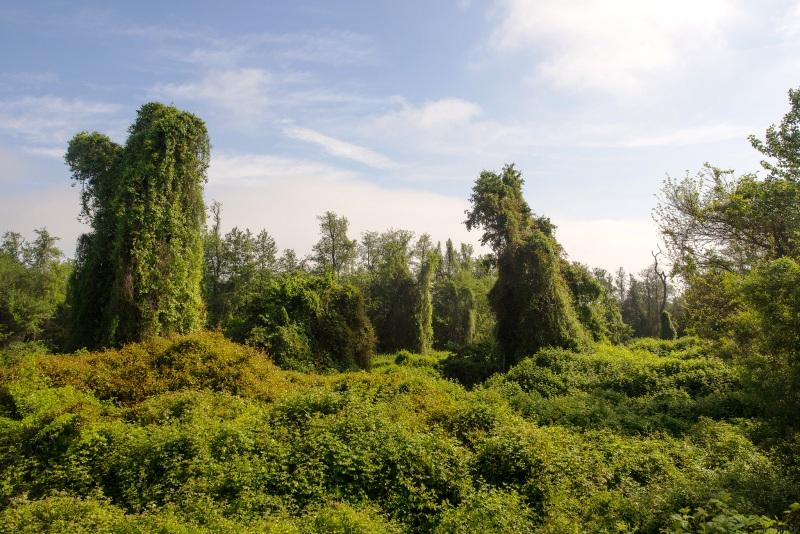 День лесов_Лиходедова