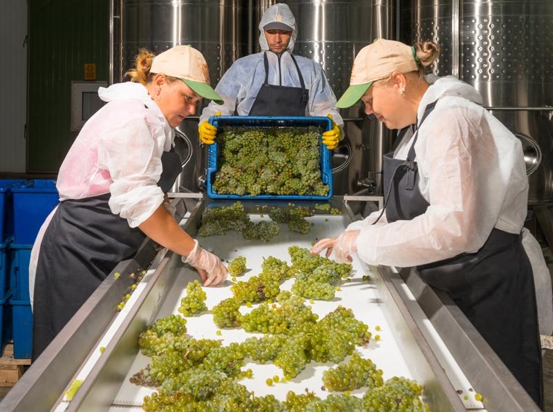 Производство вина